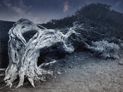 Những thân cây rùng rợn nhất thế giới - 3