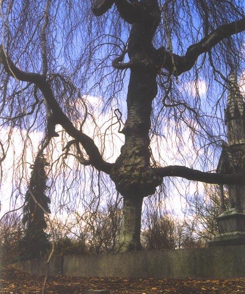 Những thân cây rùng rợn nhất thế giới - 8