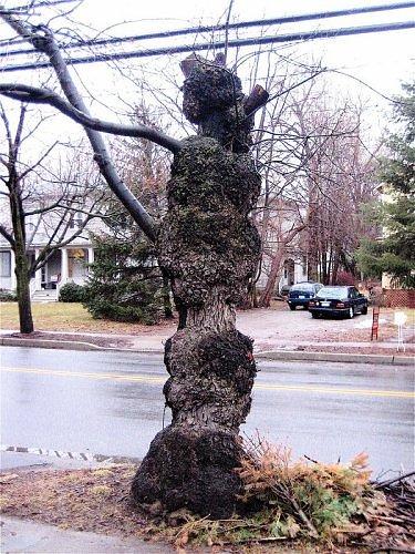 Những thân cây rùng rợn nhất thế giới - 9