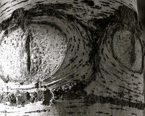 Những thân cây rùng rợn nhất thế giới - 11