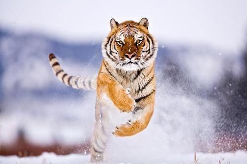 Mẹo chụp ảnh động vật hoang dã ấn tượng - 5