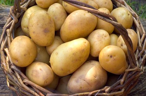 Khoai tây mang lại nhiều lợi ích thiết thực cho sức khỏe. Ảnh: realfood