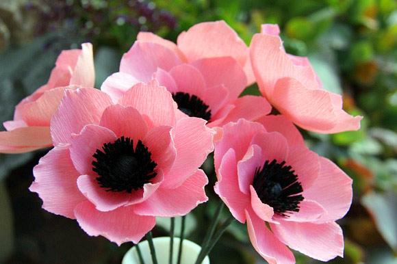 Khéo tay làm hoa poppy giấy đẹp lung linh