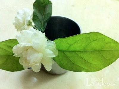 Giúp da trắng mịn mùa hè bằng trà xanh