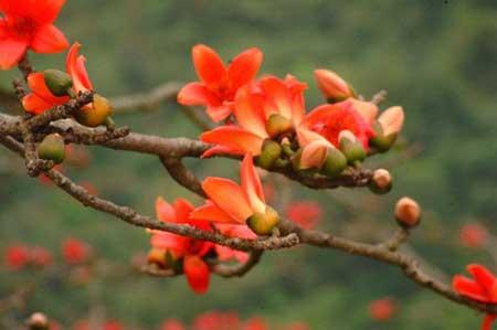 Những loài hoa làm đẹp cả nhan sắc và sức khỏe