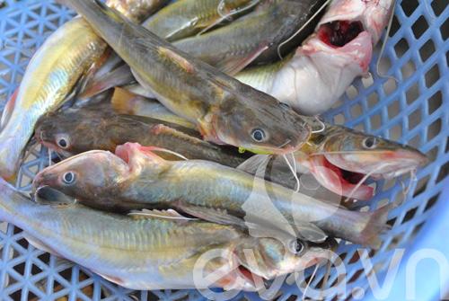 Giản dị cá lăng kho chuối hột - 2