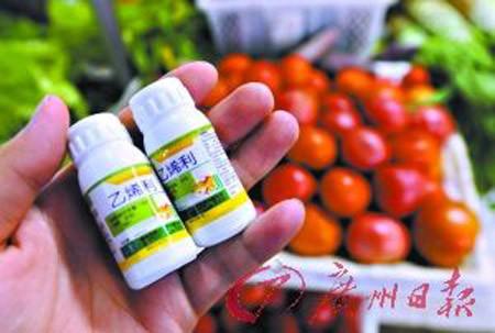 Về thuốc thúc rau quả chín của Trung Quốc - Sức Khỏe và Cuộc Sống - Chăm sóc sức khỏe - Dinh dưỡng & Sức khỏe
