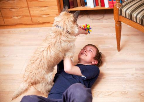 Làm sao để vật nuôi an toàn với trẻ sơ sinh
